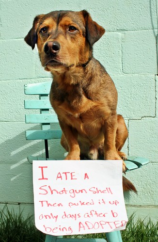 "Pallo: ""I ate a shotgun shell, then puked it up only days after being adopted"""