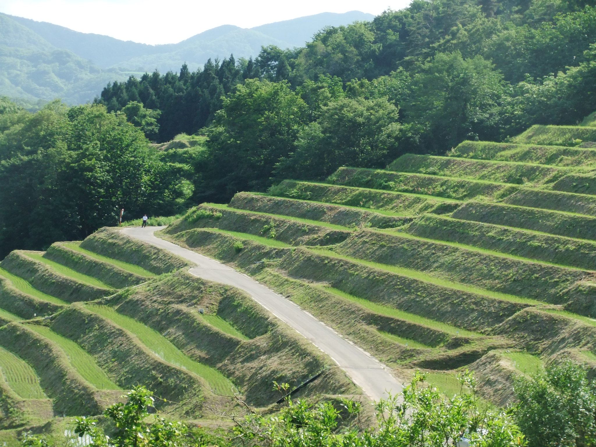 Terraced satoyama landscape, Sado, Japan
