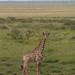 Etosha National Park impressions, Namibia - IMG_3094_CR2_v1