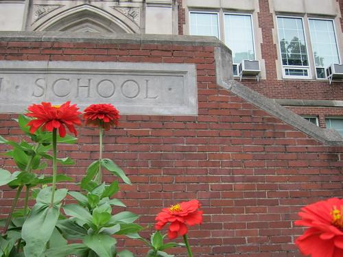 school flowers