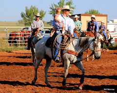 animal sports, rodeo, western riding, equestrian sport, sports, western pleasure, charreada, reining, cowboy,