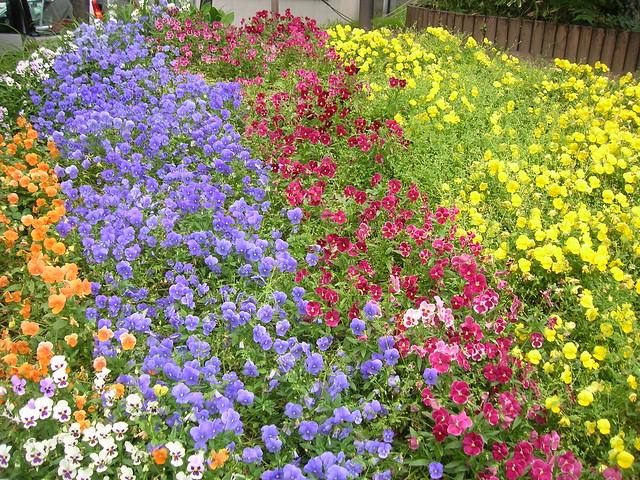 day3-odori-park-flower2