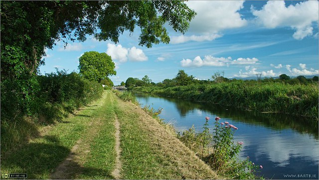 Summer on the Royal Canal