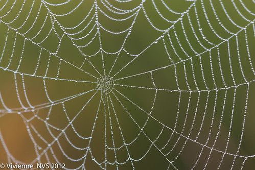 mist fog sunrise illinois spiderweb dew waterdrops preserves lakecounty halfdayforestpreserve lcfpd