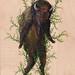 FernBison by drew mosley