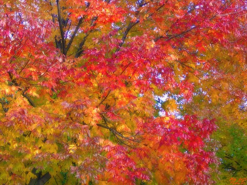 ~  Autumn is a second spring when every leaf is a flower ~ by Purpletree..(Nancy Lee)