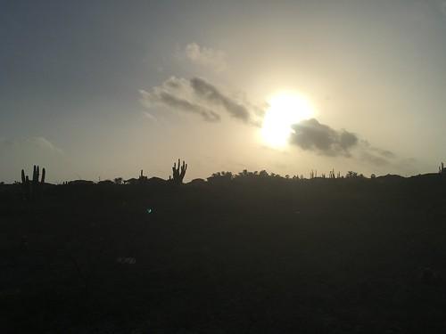 aruba cactus sunrise