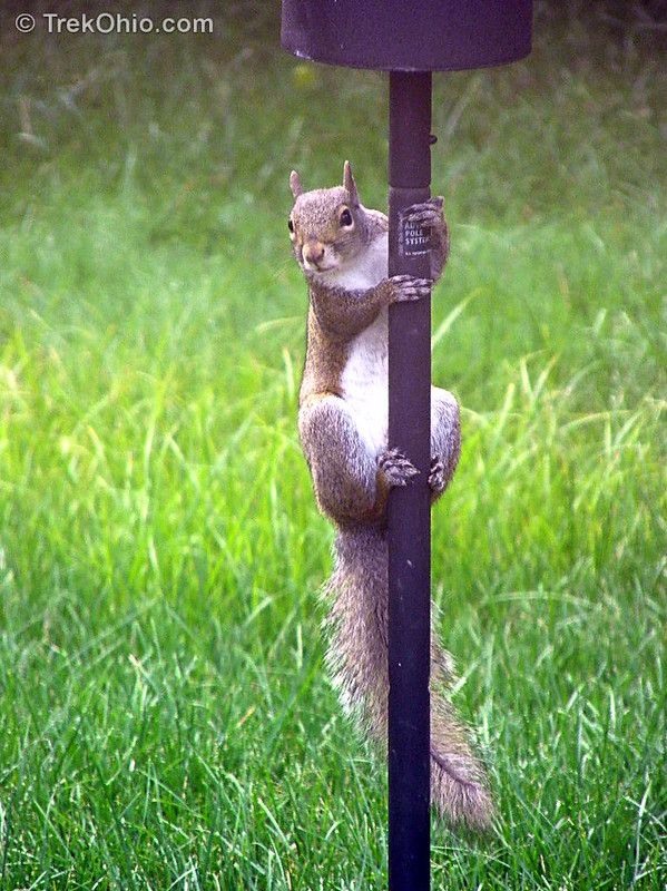 Squirrel wishing he could get to the bird feeder