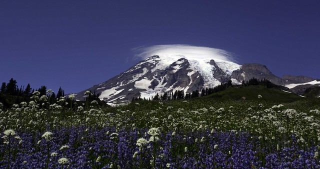 Mt Rainier and flowers in the meadow