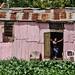 La mujer de la casa rosa