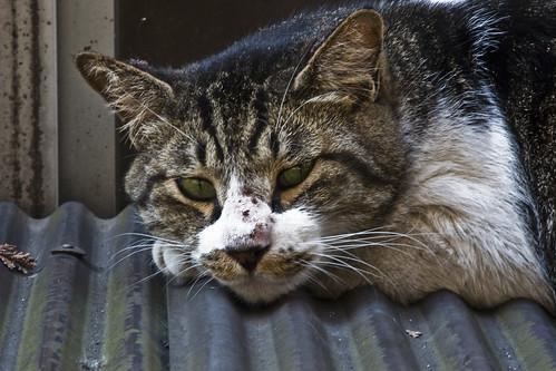 Cat_2012-08-25N02