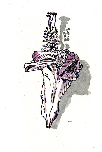 verblühte Hibiskusblüte / hibiscus blossom by Inky's Journal