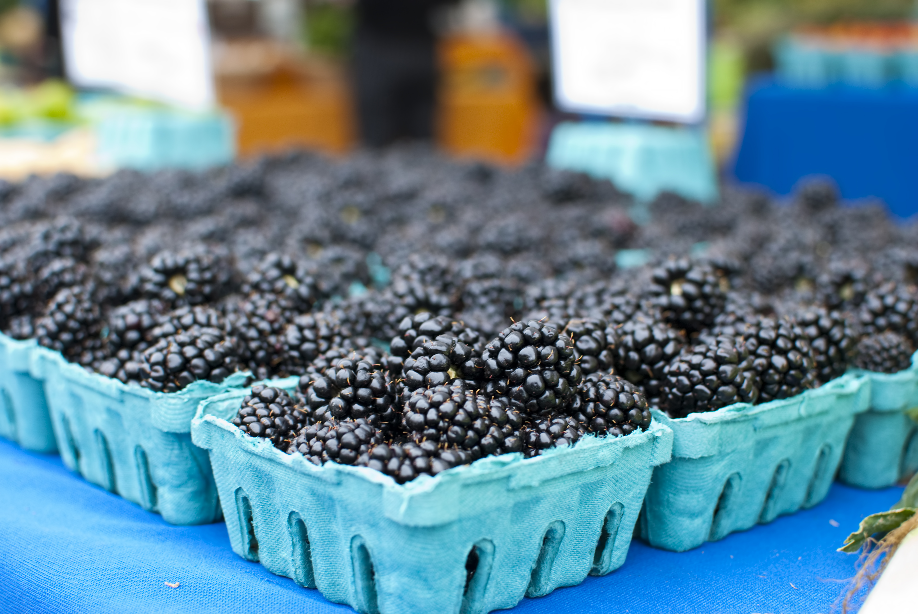 Blackberries, Corvallis Farmers Market