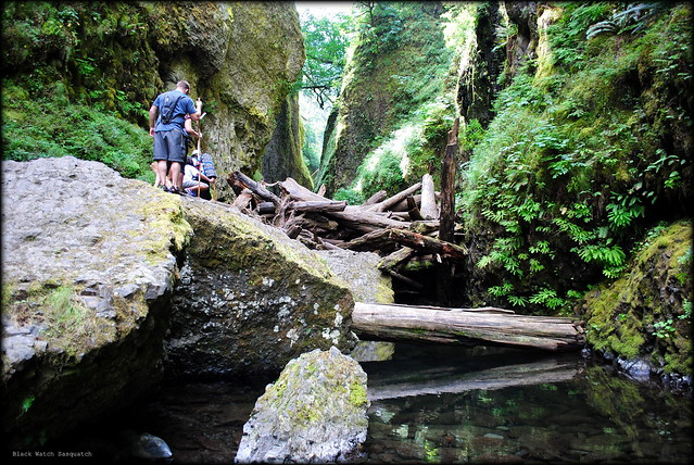 a hiker contemplating the best way over the log jam - Oneonta Gorge