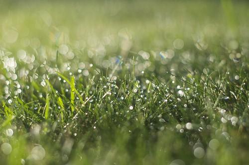 [フリー画像素材] 花・植物, 草原・草, 雫・水滴, 緑色・グリーン ID:201209040600