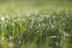 [Free Images] Flowers / Plants, Grassland / Grass, Water Drop, Green Color ID:201209040600
