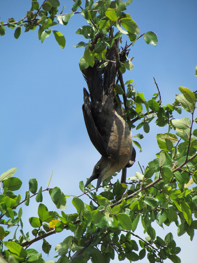 bird tree 2