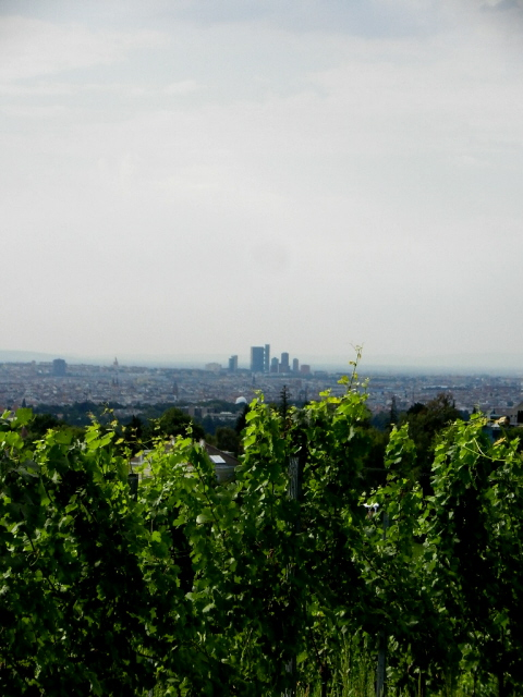 Kahlenberg_2012_15