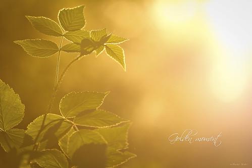 sunset nature canon suomi finland bokeh joensuu luonto auringonlasku linnunlahti flickraward flickraward5 flickrawardgallery