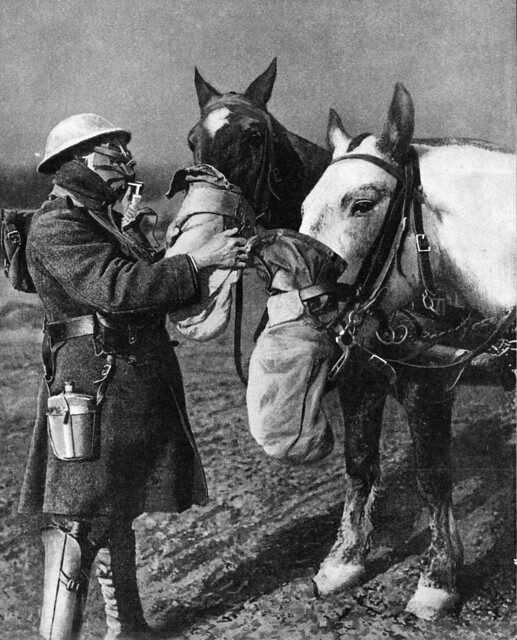 war horses in gas masks 1918 great war photos