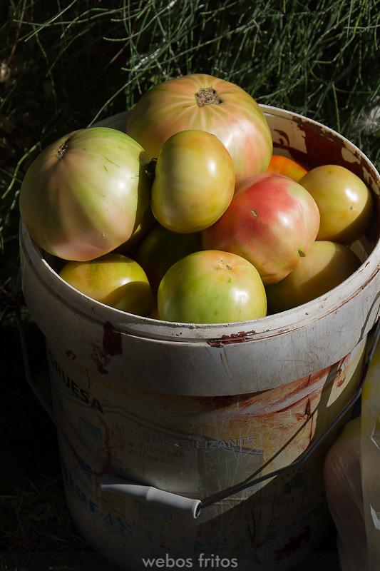 Los tomates de Paco