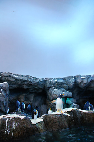 Penguins Under Aurora by TOTORORO.RORO (Back, Will Catch Up)