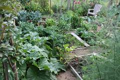 september garden plot 044