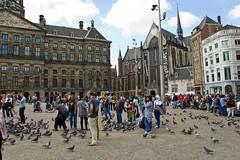 Pigeons sur le Dam Square