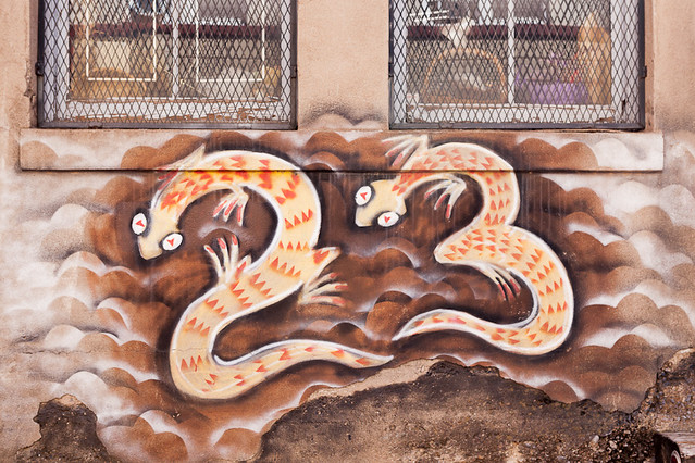 23 Lizard in Bisbee Arizona