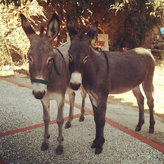 Donkeys on the doorstep. Just when I thought living here couldn't get any weirder.