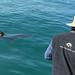 Basking Shark (Tom Brereton)