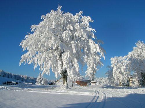 Piane di Mocogno: paesaggio invernale