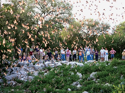 Visitors gather at Bracken Cave near San Antonio, Texas, to experience the nightly flight of millions of Mexican free-tailed bats. A public education webinar is set for Sept. 18.  Registration is free. Photo courtesy of:  Bat Conservation International
