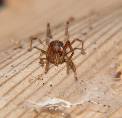 Mites and Ticks and Harvestman of Whitsunday Shire