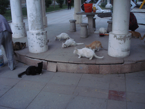 Cats in Shenyang, China _ 0157