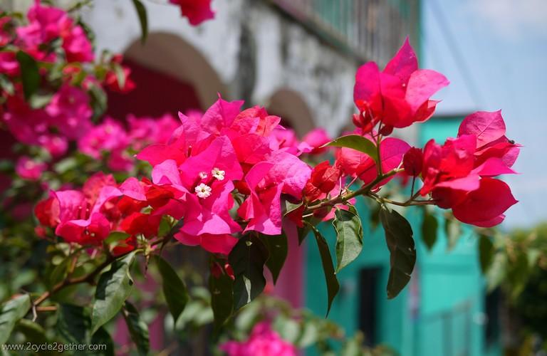 Flowers, Ixtlán del Rio, Nayarit