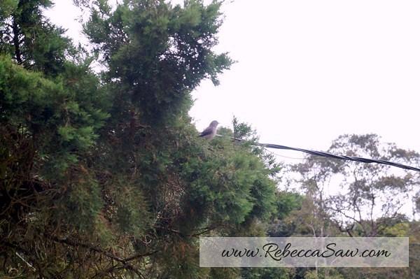 bird fraser hill