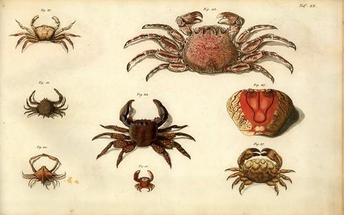 005-Â Versuch einer Naturgeschichte der Krabben und Krebse- 1790- Johann Friedrich Wilhelm Herbst- Humboldt University