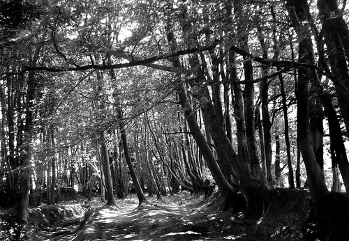 camera uk trees england white black monochrome stone point this was photo shoot with sony taken somerset hills and hanging dsc w30 originally quantock my triscombe