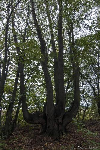 Pădurea Comana
