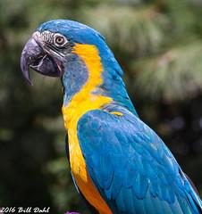 Parrot10