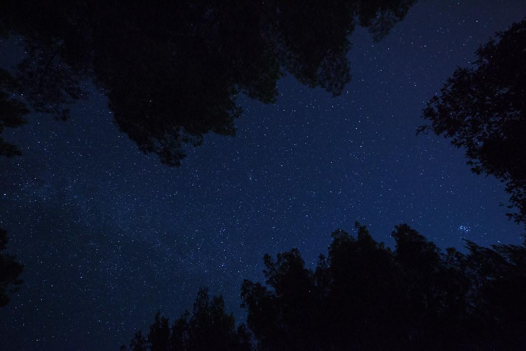 stars. perseid meteor shower