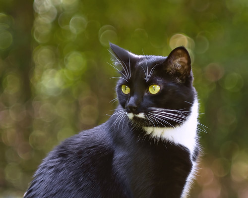 [フリー画像素材] 動物 1, 猫・ネコ ID:201208191000