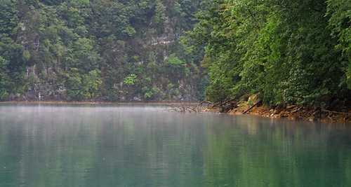 trees mist reflection green nature water fog landscape tennessee norrislake