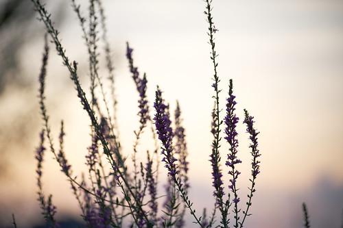 plant flower japan sunrise nikon 花 kanagawa 植物 kawasaki 川崎 神奈川 ニコン d700