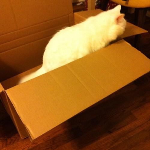 Box Nilla.