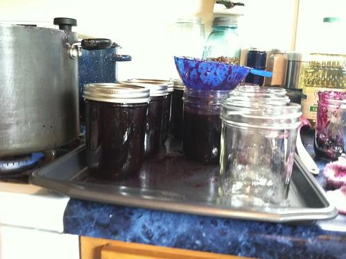 processing grapes