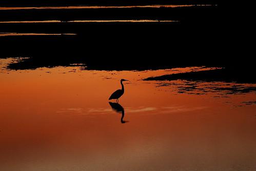 sunset washington pugetsound oakbay