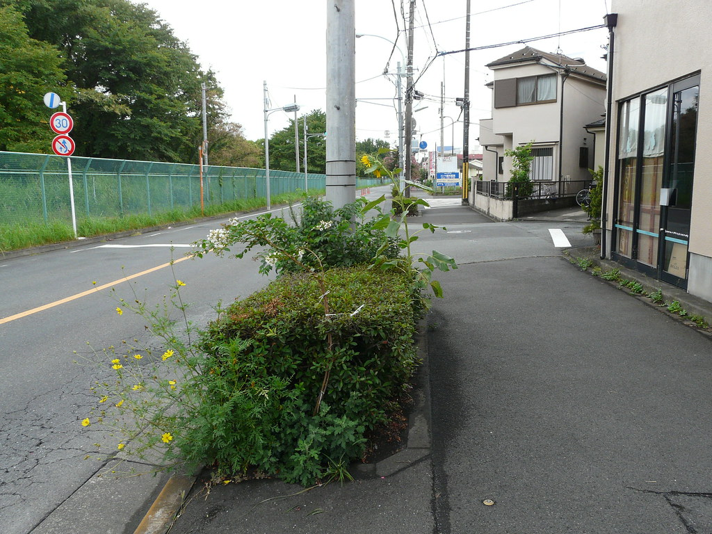 Tokyo Curbside Sunflowers