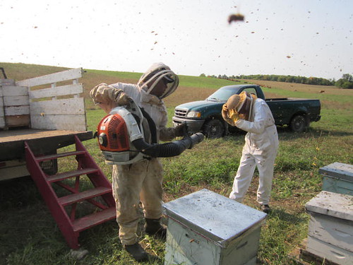 havelock Ontario beekeeper buckwheat honey alfredo malanca